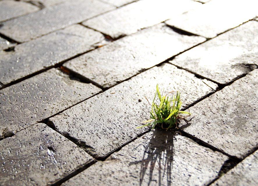 L'economia green è compatibile con lo sviluppo sostenibile?