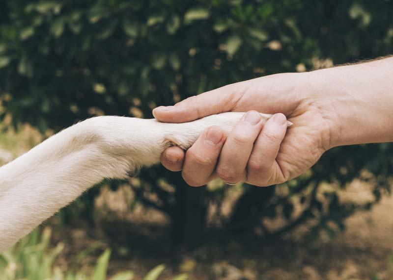 Sai qual è la differenza più importante tra gli uomini e gli animali?